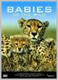SIGNDVD 018 - Babies Of The Wild (Dvd) - Babies